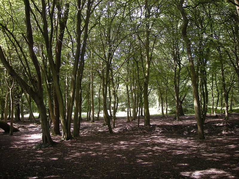 File:Hainault Forest.jpg