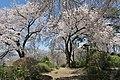 Hakoda Castle 2.jpg