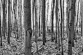 Haltern am See, Silbersee III, Bäume -- 2021 -- 4524 (bw).jpg