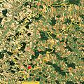 Haunzenbergersöll Lage Luftbild.jpg