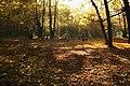 Herbstliches Rosental - panoramio.jpg