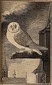 Histoire naturelle des oiseaux (1770) (14562997708).jpg