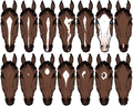 Horsemarkings.png
