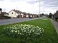 Hospital Road, Omagh - geograph.org.uk - 733498.jpg