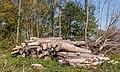 Houtopslag langs pad. Locatie, natuurterrein Beekdal Linde Bekhofplas 03.jpg