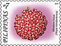 Hoya mindorensis 2011 stamp of the Philippines.jpg