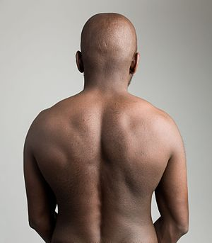 Human back - Image: Human back on gray background