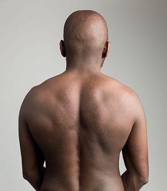Human back - Image: Human back on gray background