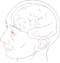 Human head and brain diagram.svg