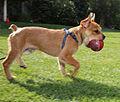 Humphrey running.jpg