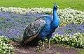 Im Weltvogelpark Walsrode..2H1A8176WI.jpg