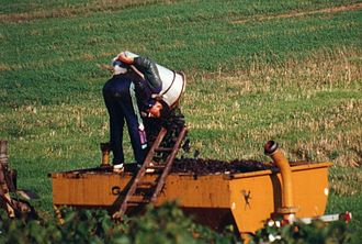 Côte Chalonnaise - Harvesting Pinot noir grapes in the Côte Chalonnaise
