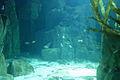 Istanbul Aquarium-3.JPG