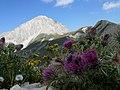 Italia - Abruzzo, fiori di montagna sotto il Corno Grande del Gran Sasso - panoramio.jpg