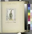 Italy, Minor States, 1799-1805 (NYPL b14896507-1512030).tiff
