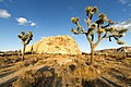 JOSHUA TREE NATIONAL PARK (15276158396).jpg