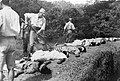 Japanese atrocities imperial war museum K9923.jpg