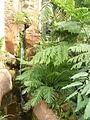 Jardin des plantes Paris Serre australienne et néo-calédonienne2.JPG
