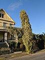 Jasmine Utility - City Park Avenue New Orleans.jpg