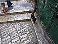 Jerusalem Kitty! (6034515143).jpg