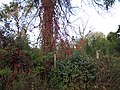 Jesenske barve - panoramio.jpg