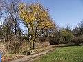 Jesień w parku - panoramio.jpg