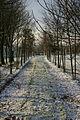 Jeunes bois, merisier, châtaignier, noyer, chêne en début d'hiver..jpg