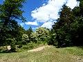 Jezioro Sępoleńskie leśna ścieżka przy brzegu. - panoramio.jpg