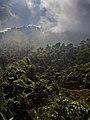 Jungle Near Tùng Bà Vietnam (157218743).jpeg