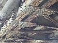K-híd, Óbuda51.jpg