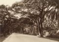 KITLV - 80028 - Kleingrothe, C.J. - Medan - Northam Road at Penang Island - circa 1910.tif