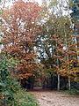 Kaapse bossen, bospad (2).jpg