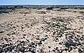 Kalahari 1988 (PIVF2802).jpg