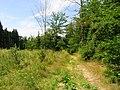 Kamenice, Ládví, forest.jpg