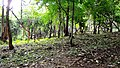 Kava - Anakkal Road in Forest, Palakkad - panoramio (5).jpg