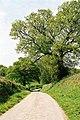 Kentisbeare, lane - geograph.org.uk - 47577.jpg