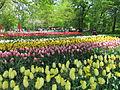 Keukenhof Garden (18).JPG