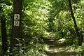 Kobylnica trails (9).JPG