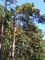 Kotelniki, Moscow Oblast, Russia - panoramio (44).jpg