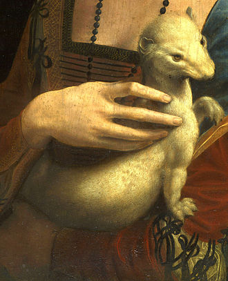 Mustelidae - Detail from Leonardo da Vinci's Lady with an Ermine,  1489–1490