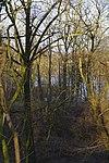 LSG H 00070 Calenberger Leinetal - Blick vom Wall auf den See.jpg