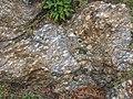 La Morcuera gneiss - Miraflores de la Sierra, Madrid, Spain 01.jpg