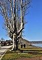 Lago di Bolsena - Capodimonte, spiaggia 1.jpg