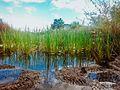 Lagoa da APP da Lagoa Encantada que faz parte da região dos alagados do Vale Encantado.jpg