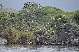 Catemaco (municipality) - Lake island filled with herons