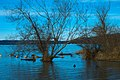 Lake Sammamish State Park (198153715).jpeg