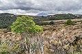 Landscape in Tongariro National Park 20.jpg