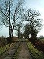 Lane to Newland Farm, Bentley - geograph.org.uk - 111157.jpg