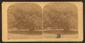 Large oak, 700 years old, Magnolia Cemetery, Charleston, S.C, from Robert N. Dennis collection of stereoscopic views 5.png