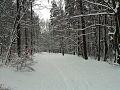 Lasy Chylońskie Zimą droga1.jpg